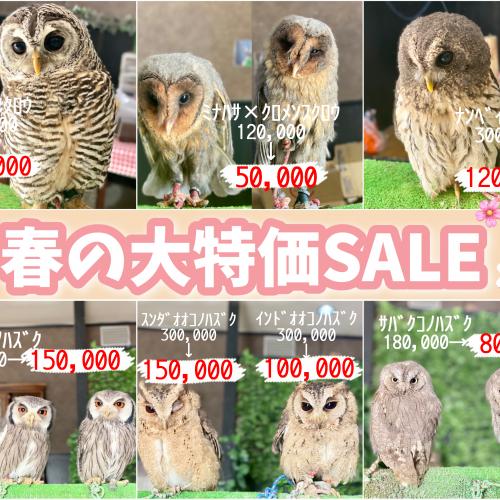 【終了】【春休み大特価セール!】イメージ