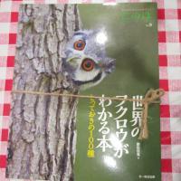 世界のフクロウがわかる本イメージ